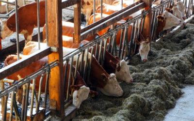 Operaciones auxiliares de manejo de la producción en explotaciones ganaderas