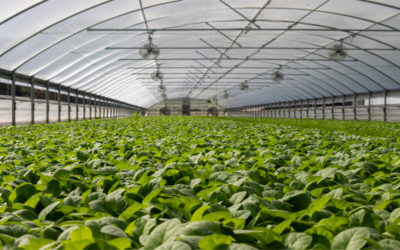 Gestión de la producción de plantas y tepes en vivero